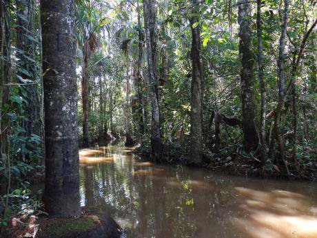 Planting trees in the Amazon does not solve anything