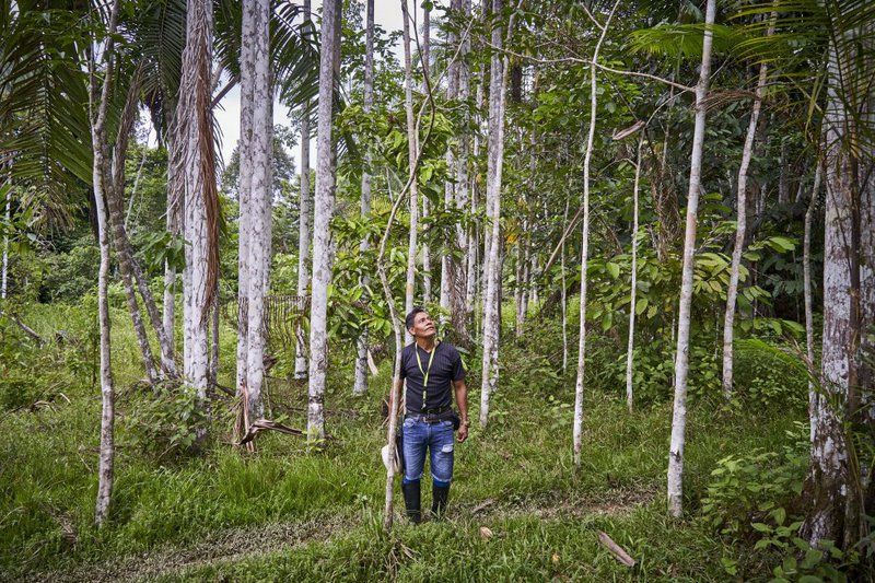 Gregorio shows the macacauba trees planted by his father. The macacauba wood is the most sought after in the Colombian Amazon.