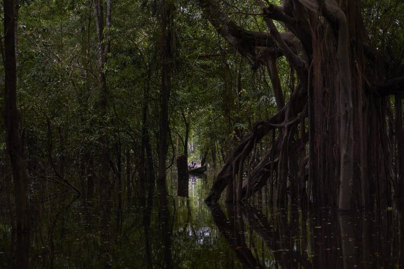 Flooded forest near the San Francisco community. In the rainy season, which coincides with the Amazonian winter, the rivers overflow, creating flooded forests where pink dolphins fish for their prey.