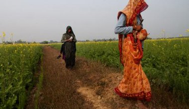 Farm hands from dalit communities walk through the mustard field in Uttar Pradesh