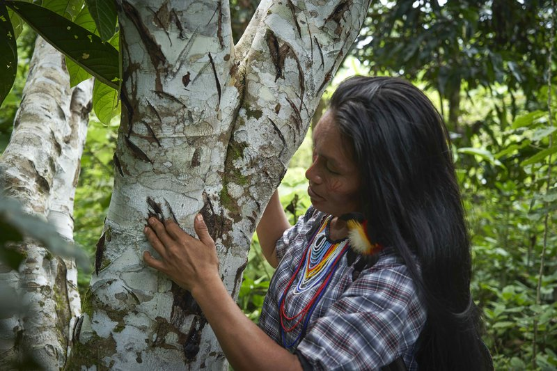 2019-10-27-RAINFOREST_DEFENDERS_ECUADOR-Sharamentza-15159-PA.jpeg