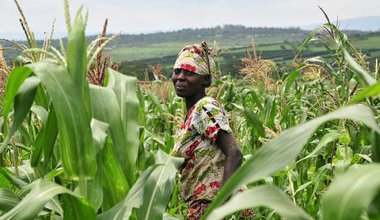 A woman standing in a maize farm in Rwanda.