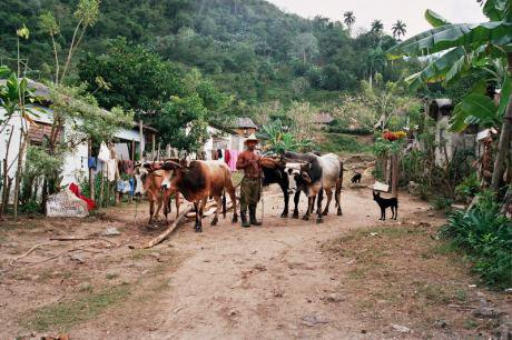 A shirtless Cuban man stands on a dirt road with livestock in rural Cuba.