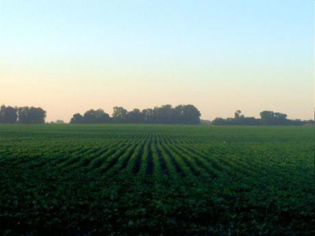 A soybean field in Argentina's fertile pampas region.