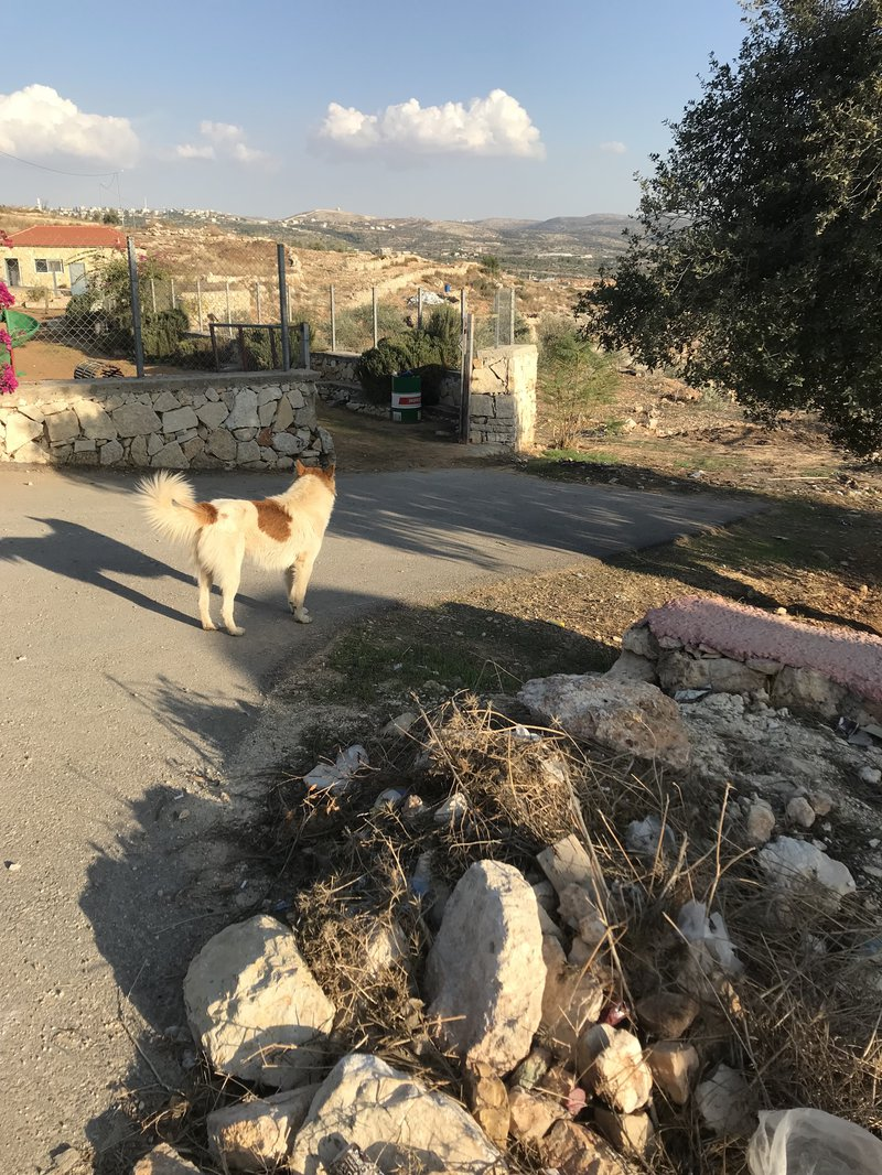 5_Om Sleiman path view with dog_IMG_7769.jpg