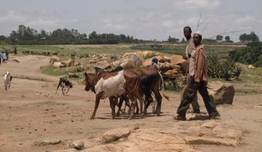 Deforested rural Ethiopia.
