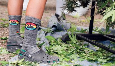 Cannabis-Trimmer-Wearing-Socks.jpg