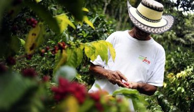 Colombian coffee farmer. CIAT/Flickr. Some rights reserved.