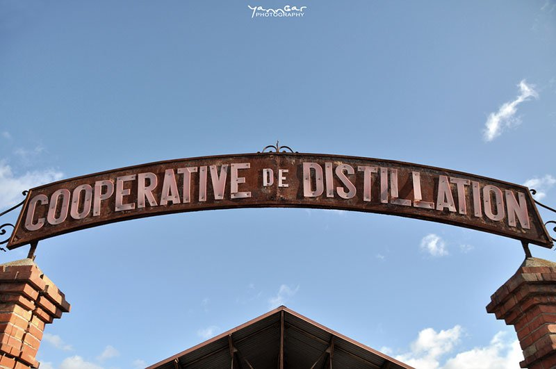 lead Cooperative de Distillation by Yann Gar