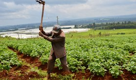 Farmer Shewa in Oromia region of Ethiopia, near Holeta town,  July 31, 2014