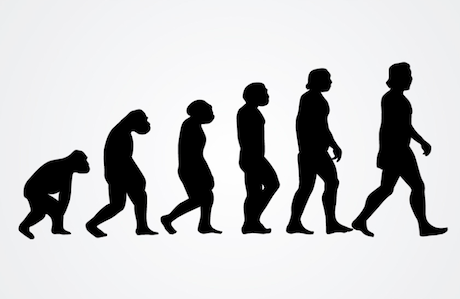 Human evolution. Flickr:. Some rights reserved.png