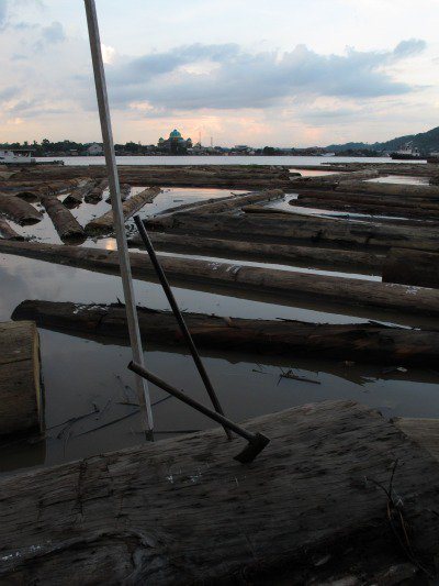 Logs destined for plywood production line the banks of the Mahakam river in Samarinda, provincial capital of East Kalimantan. Nearly 50% of the UK's tropical plywood is imported from Indonesian rainforests.