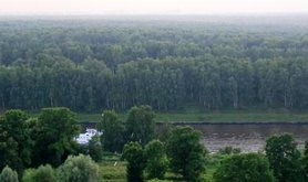 Khimki Forest