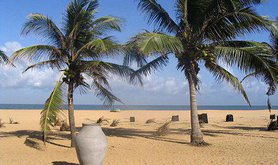 Palm trees on Sri Lankan beach