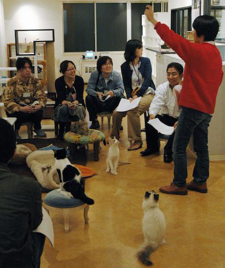 A matchmaking session in a Tokyo cat cafe, 2010. AP/Press Association Images. All rights reserved.