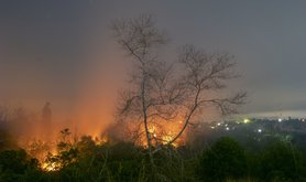 Palm oil fire.jpg