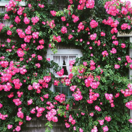 Pink-Window-Summer-Garden-Cottage-Roses-Flowers-2113180_0.jpg
