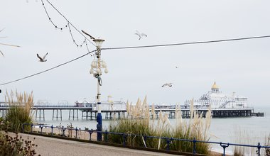 Seagulls in view of Eastbourne pier - Aloha Bonser-Shaw.jpg