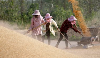 Wheat farmers in China.jpg