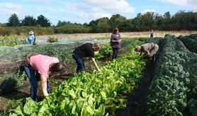 Community food production