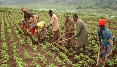 image of women working a field