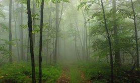 misty wood path.jpg