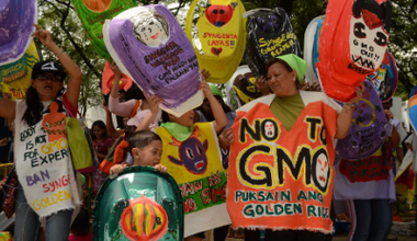 Mothers protest GMO Rice on World Environment Day