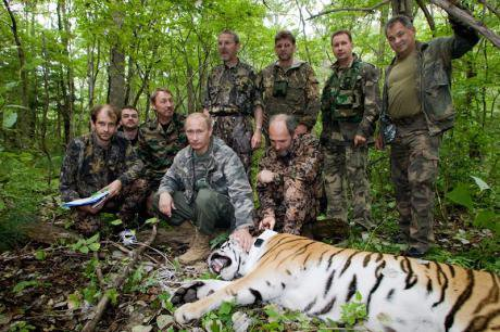 Putin and associates in fatigues pose with a tiger that has been tranquilized and tagged.